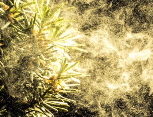 Top 5 Tree Pollen Allergy Symptoms in Las Vegas