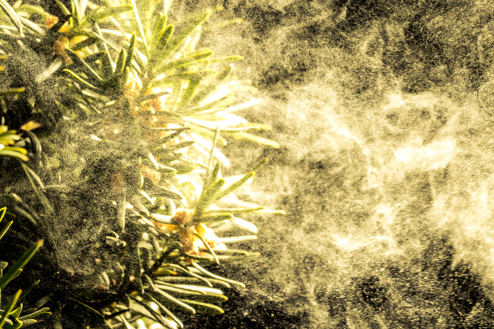 cloud of pollen coming off trees as an example of las vegas allergies