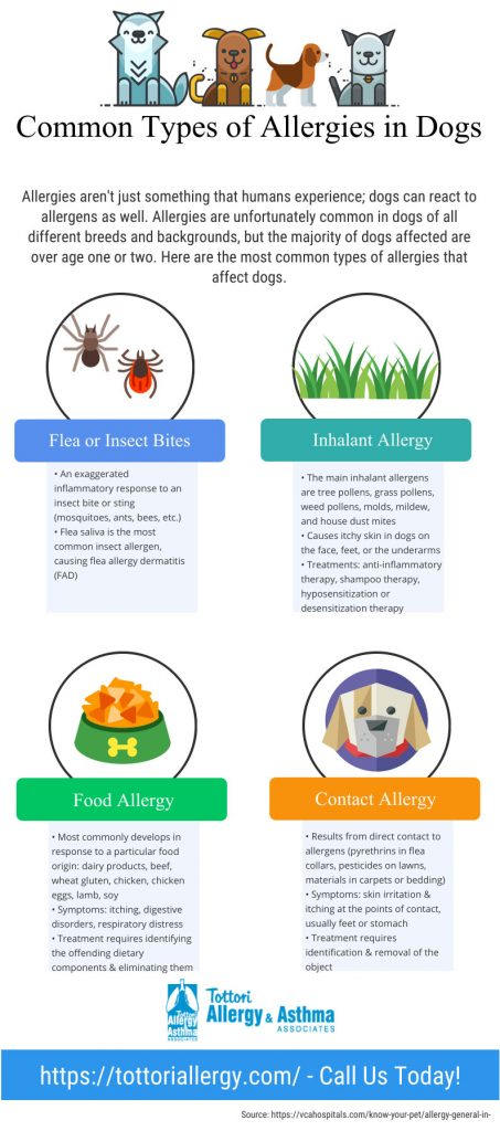 Infographic Common Types Of Allergies In Dogs