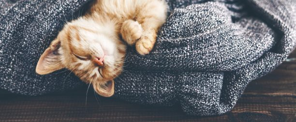Three Tips for Combating Cat Allergens in Your Home