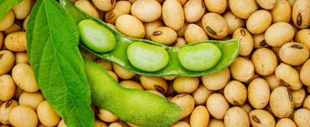 Tips for Staying Safe When Eating Out With a Soy Allergy